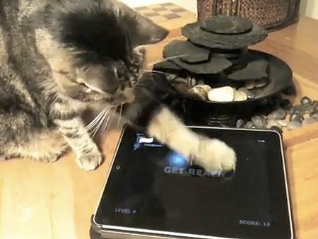 игры на iPad для котов