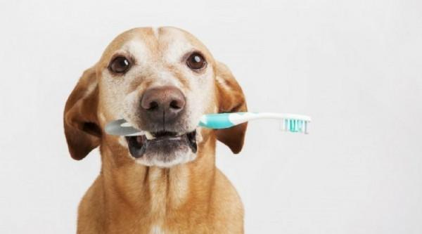 Чистка зубов собаки
